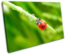 Ladybird Wildlife Animals - 13-1143(00B)-SG32-LO